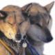 Yukon Quest™ - Das härteste Hundeschlittenrennen der Welt