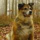 Schweizer Tierschutz STS: Kampagne für härtere Bestrafung der Täterin die Hund mit Messer brutal verstümmelte und verbluten ließ