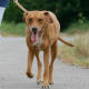 Arthrose beim Hund - Wenn die Gelenke nicht mehr mitspielen