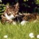 Impfung - Erfolgreicher Start in ein unbeschwertes Katzenleben