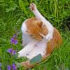 Arthrose bei Katzen - die heimliche Volkskrankheit