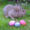 Der Osterhase: Frohe Ostern - Joyeux Pâques - Feliz Páscoa - Happy Easter - Счастливой Пасхи