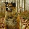 Unfassbare Tierquälerei: Hund die Genitalien abgeschnitten - Unfassbare Konsequenz: nur 300 Franken Busse