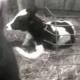 Erste Verhaftung nach schrecklichen Fällen von Tierquälerei auf US Farm