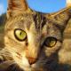 Katzenjammer verhindern - durch rechtzeitige Kastration,  Kennzeichnung und Registrierung