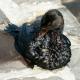 Öko-Katastrophe im Golf von Mexico: Ölmulti BP und Schweizer Firma Transocean werden zur Kasse gebeten