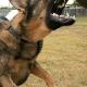 Brutalo Oma hetzt Hund auf Familie und setzt Pfefferspray ein