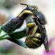 Weltweite Verluste von Honigbienen - was sind die Ursachen?