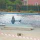Zwei Delphine als Touristen-Attraktion in engen Pool gepfercht
