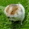 Junge grillt Hamster in Mikrowelle: Jugendknast