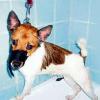 Hund aufgehängt, weil er auf den PC pinkelte: 800 Euro Strafe - Systemfehler?