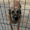 Durch die Hintertür: Aus für Zürcher Tieranwalt