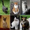 Schrecklicher Verdacht: 50 entführte Katzen zu Rheumadecken verarbeitet?