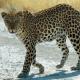 Radarfallen für WM-Touristen in Südafrikas Tierparadiesen