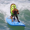 Surf Dog Competition in Kalifornien