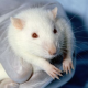 Tierversuche geringfügig gesunken, aber keine Trendwende in Sicht