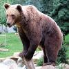 In Kärnten ist wieder der Bär los