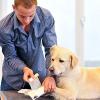 Tierisch gut - Erste Hilfe am Hund!