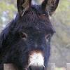 Nach Attacke auf Pensionisten: Happy End für Esel