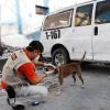 Haiti: Sechs Monate nach dem Erdbeben - 25.000 Tieren wurde geholfen