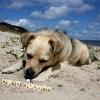 Sommerurlaub am Hundestrand
