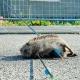 Irrer Tierquäler tötet Igel mit Pfeil und Bogen