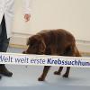 Hunde riechen Krebs - Einsatz von Vierbeinern zur Früherkennung