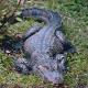 Krokodile in der Ruhr gesichtet