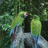 Gehässiger Nachbar erschießt 3 Papageien
