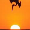 Was ist ein toter Pelikan wert? Nichts, offensichtlich