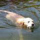 Hunde im Sommer vor Hitze schützen