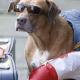 Urlaub mit dem Hund: Damit aus der Reise in den Süden kein Horrortrip wird