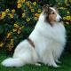 Tierpension des Grauens: Hund mit Elektroschocks fast zu Tode gequält