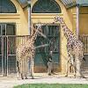 Keine Gesprächsbasis zwischen Tierschutzverein und Tiergarten Schönbrunn