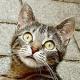Katzenhasserin wirft Kätzchen in Mülltonne - von Überwachungskamera gefilmt und überführt!