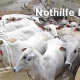 Pakistan-Flutkatastrophe: Nothilfe für Tiere hilft auch den Menschen