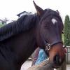 Horrorunfall mit Pferd auf A6 bei Nürnberg: Fahrer von Pferdekopf erschlagen