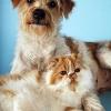Hund und Katze sind sich einig: Altern ist keine Krankheit