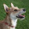 Zahnpflege beim Hund - aber wie?