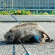 Studien zeigen: Tierquäler vergehen sich später häufig auch an Menschen