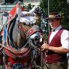 Tierquälerei auf dem Oktoberfest? - Tierrechtler kritisieren Rückkehr der Jahrmarktmenagerie