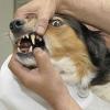 Warum gesunde Zähne bei Hunden so wichtig sind