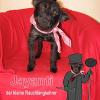 Jayanti – Ein kleiner Hund kommt nach Hause