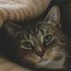 Bestialischer Katzenmord schockiert Türkei - Internetcommunity jagt enttarnten Studenten