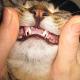 So pflegen Sie die Zähne ihrer Katze