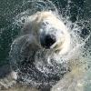 Brand im Karlsruher Zoo fallen 26 Tiere zum Opfer