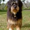 Hund aus Tierpension bei Einbruchdiebstahl gestohlen