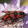 Das Insekt des Jahres: Aufmerksamkeit für die artenreichste Gruppe von Tieren