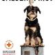 Europas größtes Tierschutzhaus von Einsturz bedroht