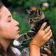 Katzenpfote und Tannengrün: So klappt es mit dem Weihnachtsbaum